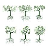 Zielony drzewo z korzeniami royalty ilustracja