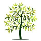 Zielony drzewo z liśćmi wektorowymi ilustracja wektor