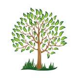 Zielony drzewo z liścia wektoru Stylizowanym wektorem ilustracja wektor