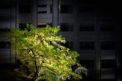 Zielony drzewo zaświecający up słońcem Fotografia Royalty Free