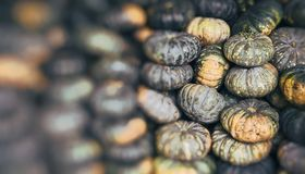 Zielony dyniowy warzywo rolnictwa zbierać Fotografia Royalty Free