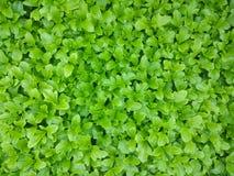 Zielony dywan zdjęcie royalty free
