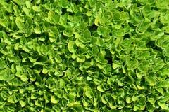 zielony dywan obrazy stock