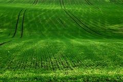 Zielony dywanik -2 Zdjęcie Royalty Free