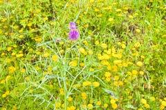 Zielony dzikiej trawy pole - folujący rama strzał Obraz Royalty Free