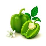 Zielony dzwonkowy pieprz na białym tle (bulgarian pieprz) Obrazy Stock