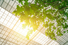 Zielony eco budynku pojęcie Fotografia Stock