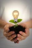 Zielony energetyczny pojęcie: Żarówka roślina Zdjęcia Stock