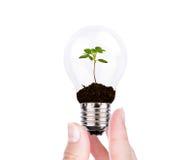 Zielony energetyczny pojęcie: Żarówka roślina na kobiety ręce Fotografia Royalty Free