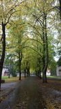 Zielony forrest uliczny leeve Zdjęcie Stock