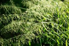 Zielony frass Fotografia Stock