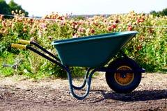 Zielony furgon przed polem dzika dalia kwitnie fotografia royalty free