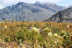 Zielony góra krajobraz w lecie Obrazy Royalty Free