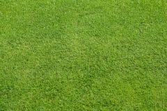 zielony gazon Obraz Stock