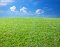 Zielony gazon Zdjęcia Stock