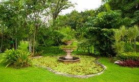 Zielony gazon i drzewo park obrazy royalty free