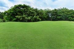 Zielony gazon i drzewo w ogródzie Obrazy Royalty Free