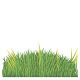 Zielony gazon na białym tle Obraz Stock