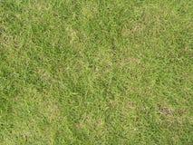 Zielony gazon trawy pola tło Zdjęcie Stock