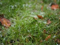 Zielony gazon z hoarfrost fotografia stock