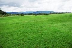 Zielony gazon z niebem fotografia royalty free