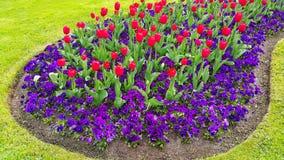 Zielony gazon z pięknymi tulipanami i fiołkami Obraz Stock
