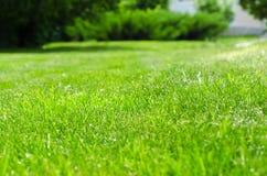 Zielony gazonu jard zdjęcie royalty free