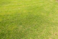 Zielony gazonu wzór, Zielonej trawy naturalny tło Obrazy Royalty Free