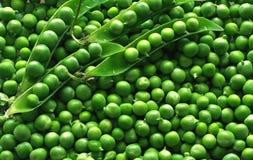 zielony groch Fotografia Royalty Free