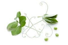 zielony groch Zdjęcia Royalty Free