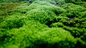 Zielony grzyb Fotografia Royalty Free