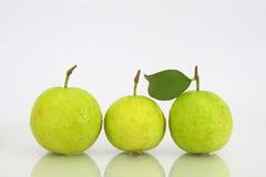 zielony guava trzy Fotografia Royalty Free