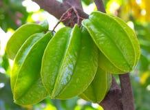 Zielony gwiazdowy jabłko na drzewie obraz royalty free