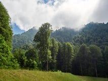 Zielony halny las w zwartej mgle i chmurach zdjęcia royalty free