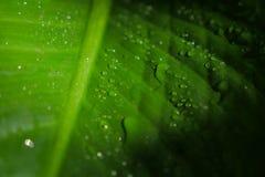 Zielony i świeży liść natury tło Obraz Stock