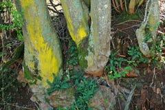 ZIELONY I ŻÓŁTY mech I liszaj Z paprociami PRZY bazą drzewa zdjęcie stock