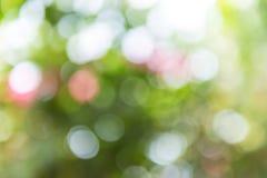 Zielony i błękitny lata bokeh dla tła Obrazy Stock