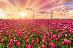 Zielony i podtrzymywalny energetyczny świat zdjęcia stock