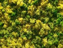 Zielony i Żółty mech Obraz Royalty Free