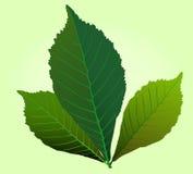 zielony ilustracyjny liść Obraz Royalty Free