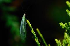 Zielony insekt w wiośnie obrazy royalty free