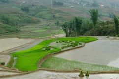 zielony jęzor Fotografia Stock