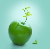 Zielony jabłko wierzchołka drzewo i dżdżownica na zielonym tle, środowiska pojęcie Fotografia Stock