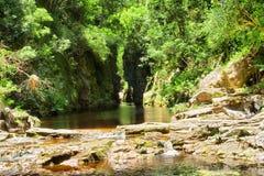 Zielony jar z wody rzeką obraz royalty free