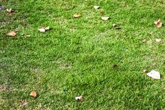 Zielony jard z liśćmi Zdjęcia Royalty Free