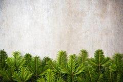 Zielony jedlinowy Bożenarodzeniowy świąteczny rabatowy tło Obrazy Stock