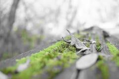 Zielony jesień druku bask obraz stock
