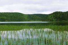 Zielony jezioro Zdjęcie Stock