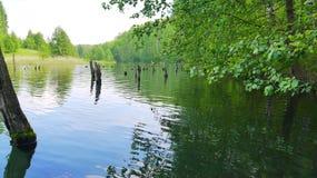 Zielony jezioro z starymi drzewo fiszorkami Obraz Stock