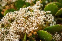 Zielony kłujący kaktus r wśród kamieni obraz royalty free